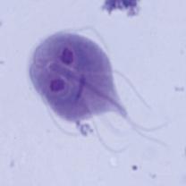 消化管内寄生虫1