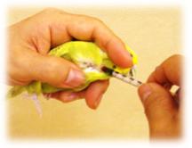 血液検査1