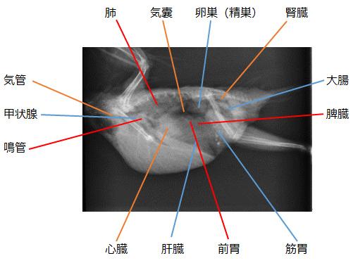 X線検査2